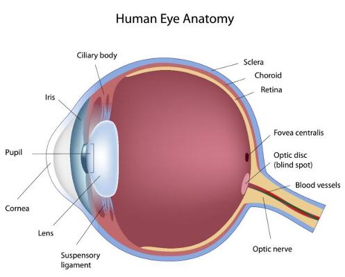 Medical Eye Health